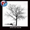10775 Lone Tree