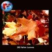 282 Fallen Leaves