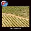 6652 Vineyard