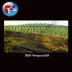 9261 Vineyard