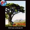 9304 Cape Landscape