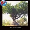 9345 Termite Hill