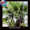 9347 Palm Tree