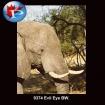 9374 Evil Eye