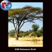 9380 Botswana Strol