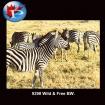 9398 Wild & Free