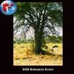 9409 Botswana Scene