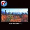 4790 Fiery Foliage