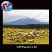 Sheep Farm NZ