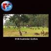 Australian Golfers