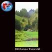 Summer Pasture NZ