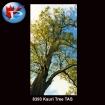 Kauri Tree TAS