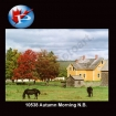 10538 Autumn Morning