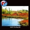 10576 The Bog