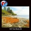 10577 Sea Weeds