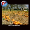 10639 Pumpkin Field