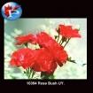 10394 Rose Bush