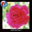 10406 Red Rose