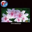 10713 Botanique
