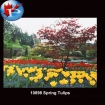 10898 Spring Tulips
