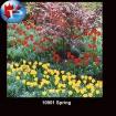 10901 Spring