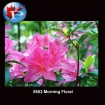 5663 Morning Floral