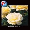 6403 White Roses