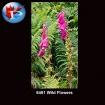 6461 Wild Flowers