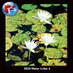 6525 Water Lilies