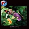 6600 Butterflies