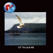 The Gull NS