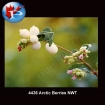 Arctic Berries NWT