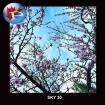 SKY-30 Blooms