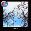 SKY-31Blooms