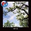 SKY-32 Blooms