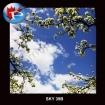 SKY-39B Blooms