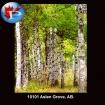10101 Aspen Grove AB.