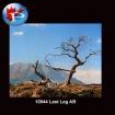 10944 Last Leg