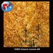 10952 Autumn Leaves