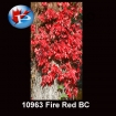 10963 Fire Red BC.