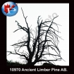 10970 Ancient Pine AB.