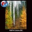 10974 Colors BC.
