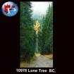 10976 Lone Pine BC.