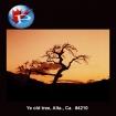 4210 Ye Olde Tree