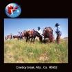 6952 Cowboy Break