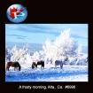 6996 A frosty morning