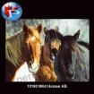 10180 Wild Horses