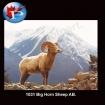 1031 Big Horn Sheep