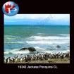 10342 Jackass Penguins
