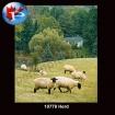 10778 Herd